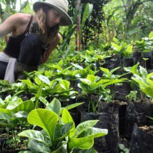 Finca Organica, Cielo Verde in Costa Rica volunteering opportunities