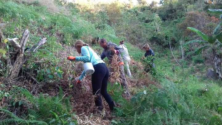 Finca Organica, Cielo Verde in Costa Rica - Volunteers working on the farm